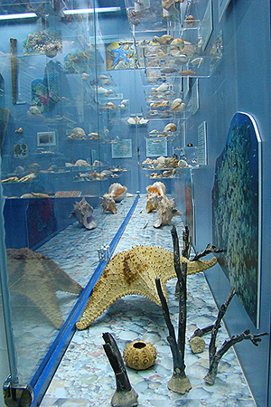 Музей моря.