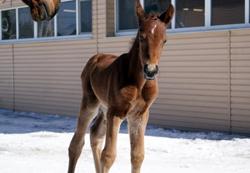 Лошадки Новой Ельни